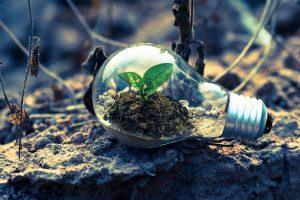 hayhursts go eco friendly